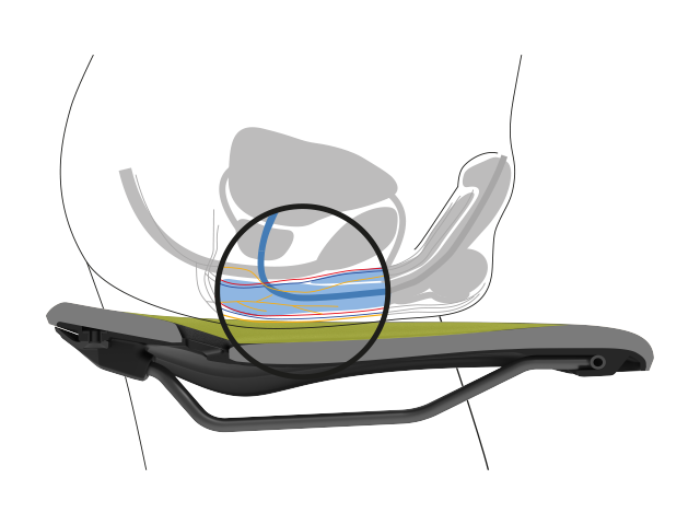 Position of a male pelvis in cross section with illustration of the nerve tracts, bones and soft tissues, illustrating the relief of an Ergon saddle
